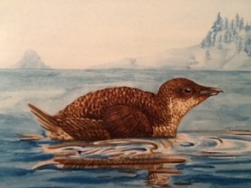 marbled-murrelet-painting