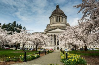WA Capitol in spring