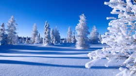 Happy New Year winter snow forest