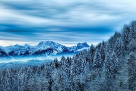 Winter Forest Mountains pixabay.com